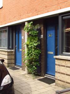 Greenwave naast voordeur (Ronald Loch)